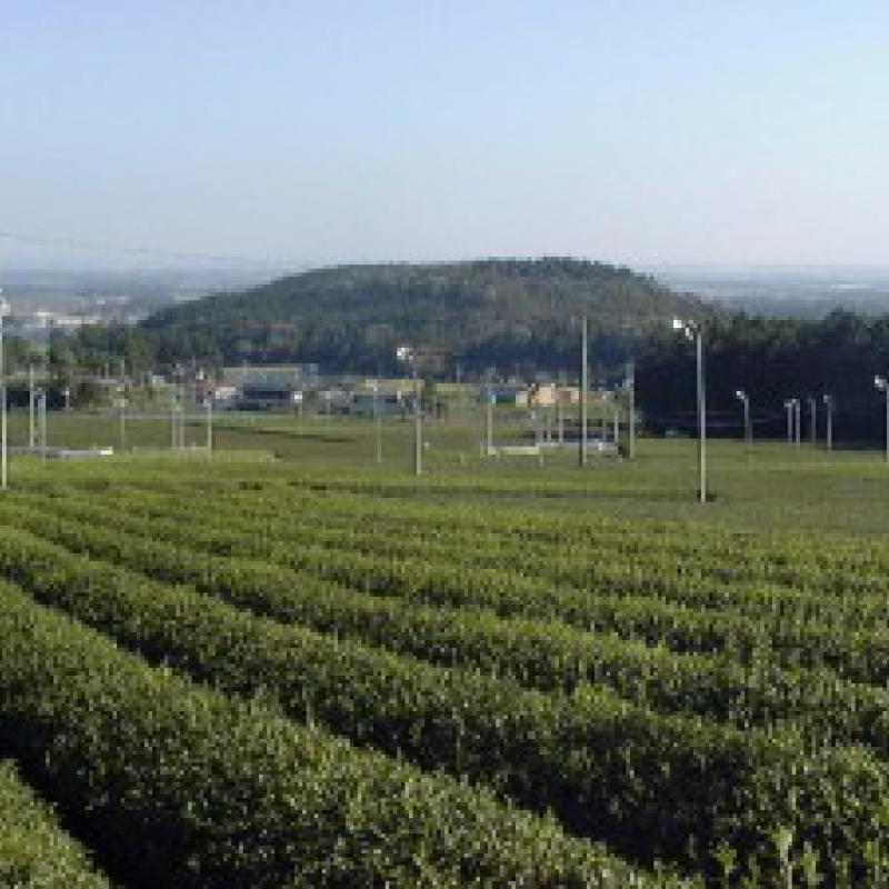 水出し茶「sui-cha」 ~伊勢本かぶせ茶(三重県四日市市)