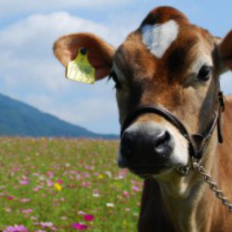 最高級の肉と乳~蒜山ジャージー(岡山県真庭市)