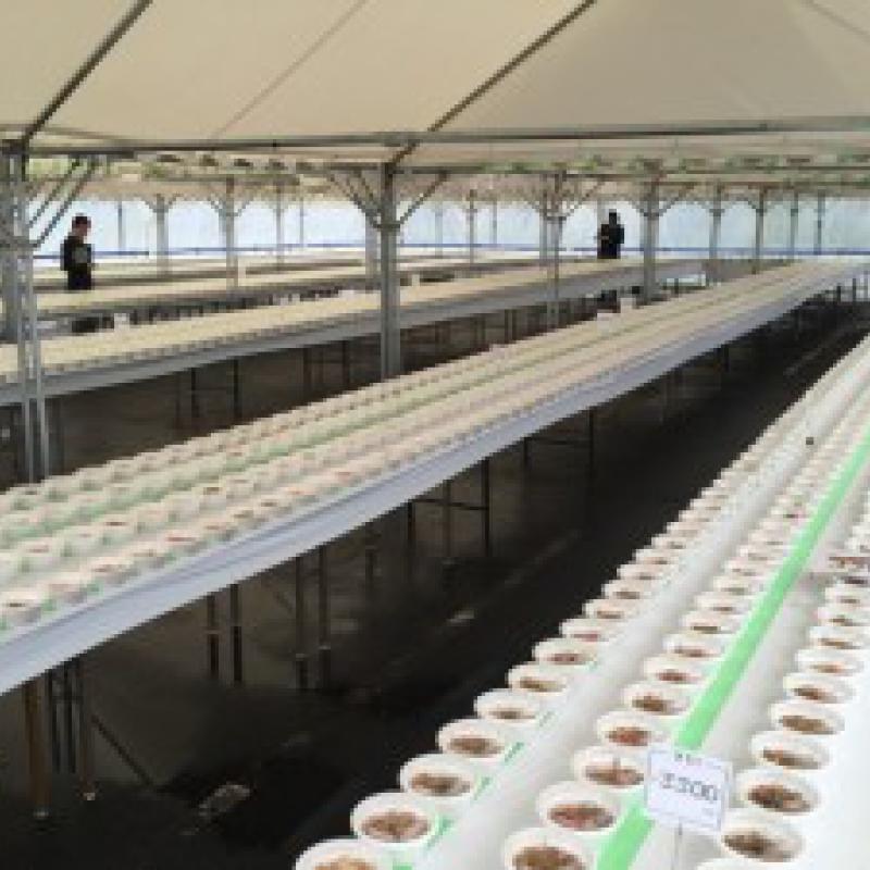「麺の入ったボウルの列」でギネス世界記録を大幅に更新|群馬県太田市