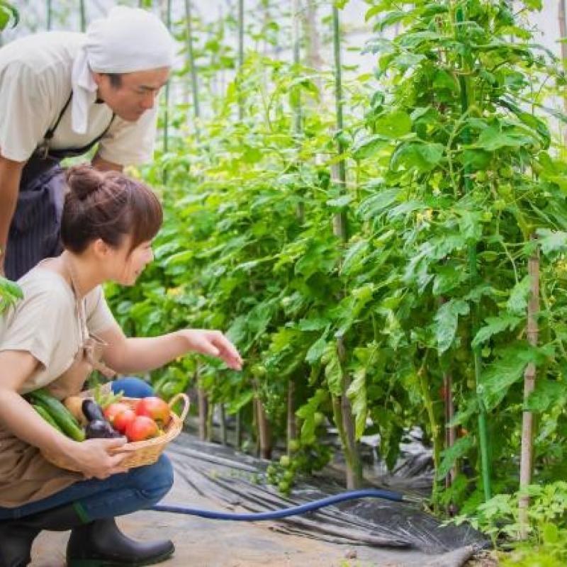 地域の食農体験情報サイト「Taabel」がリニューアルオープン